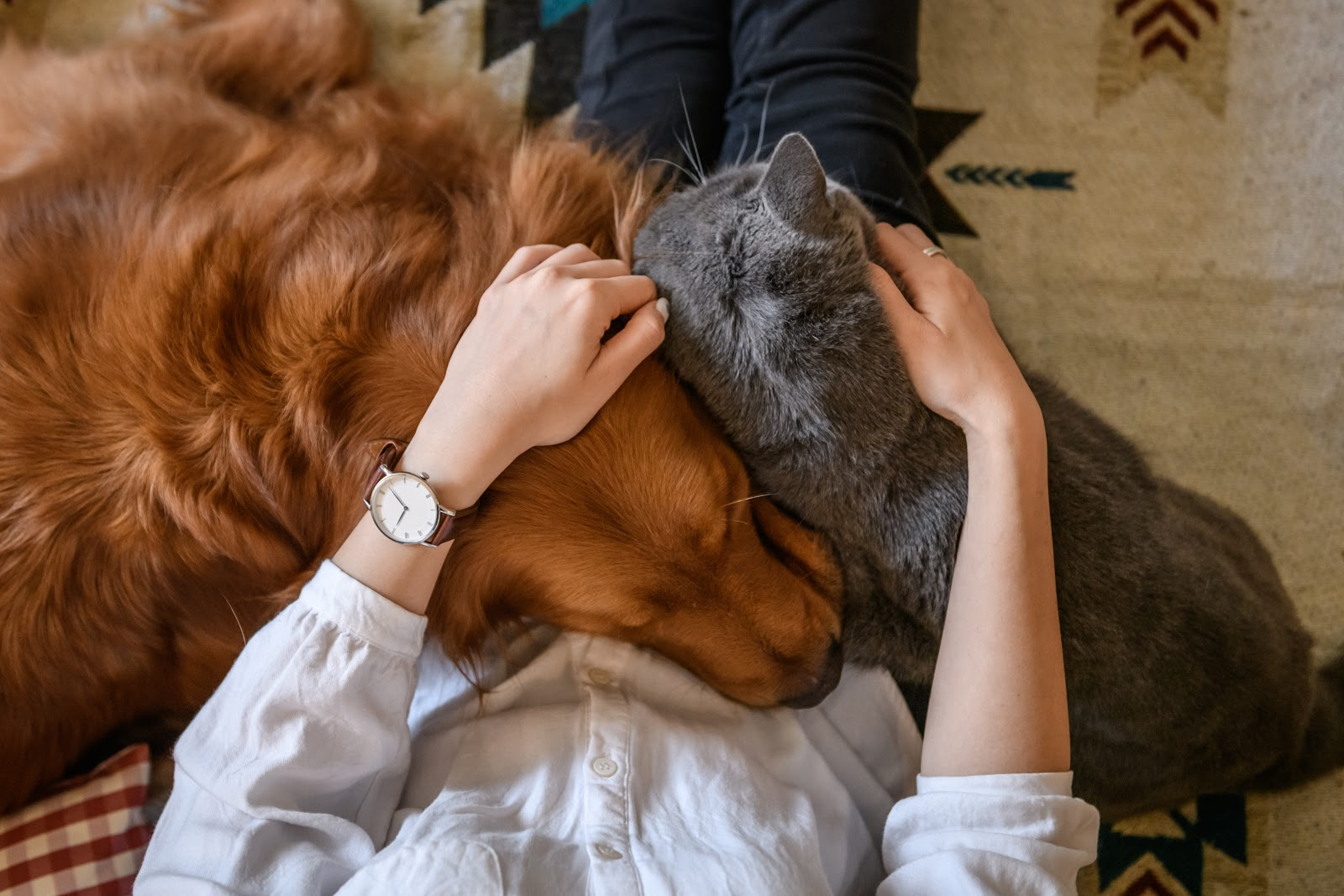 cat and dog cuddling with owner on couch