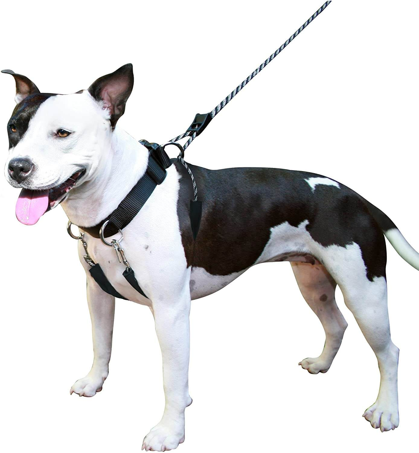 Sporn Dog Halter for Large Breed Dogs