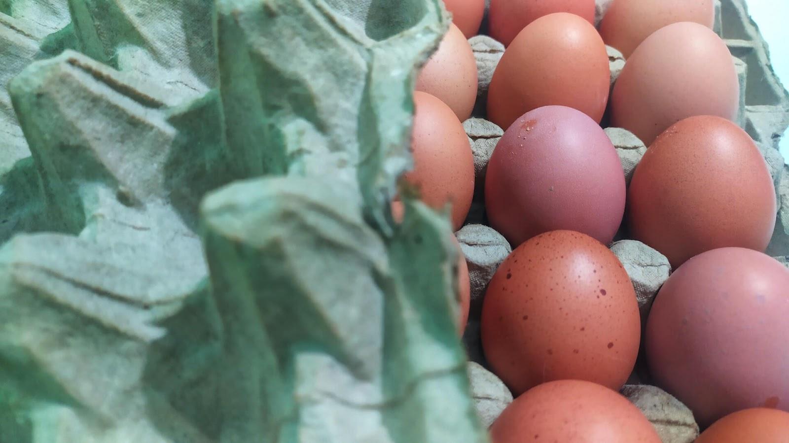 Close-up of an egg carton