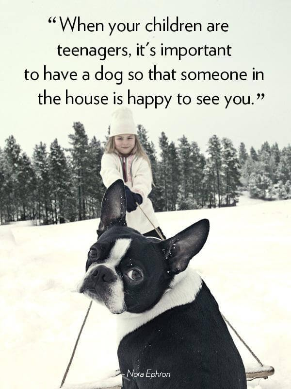When your children are teenagers, it's important to have a dog so that someone in the house is happy to see you.