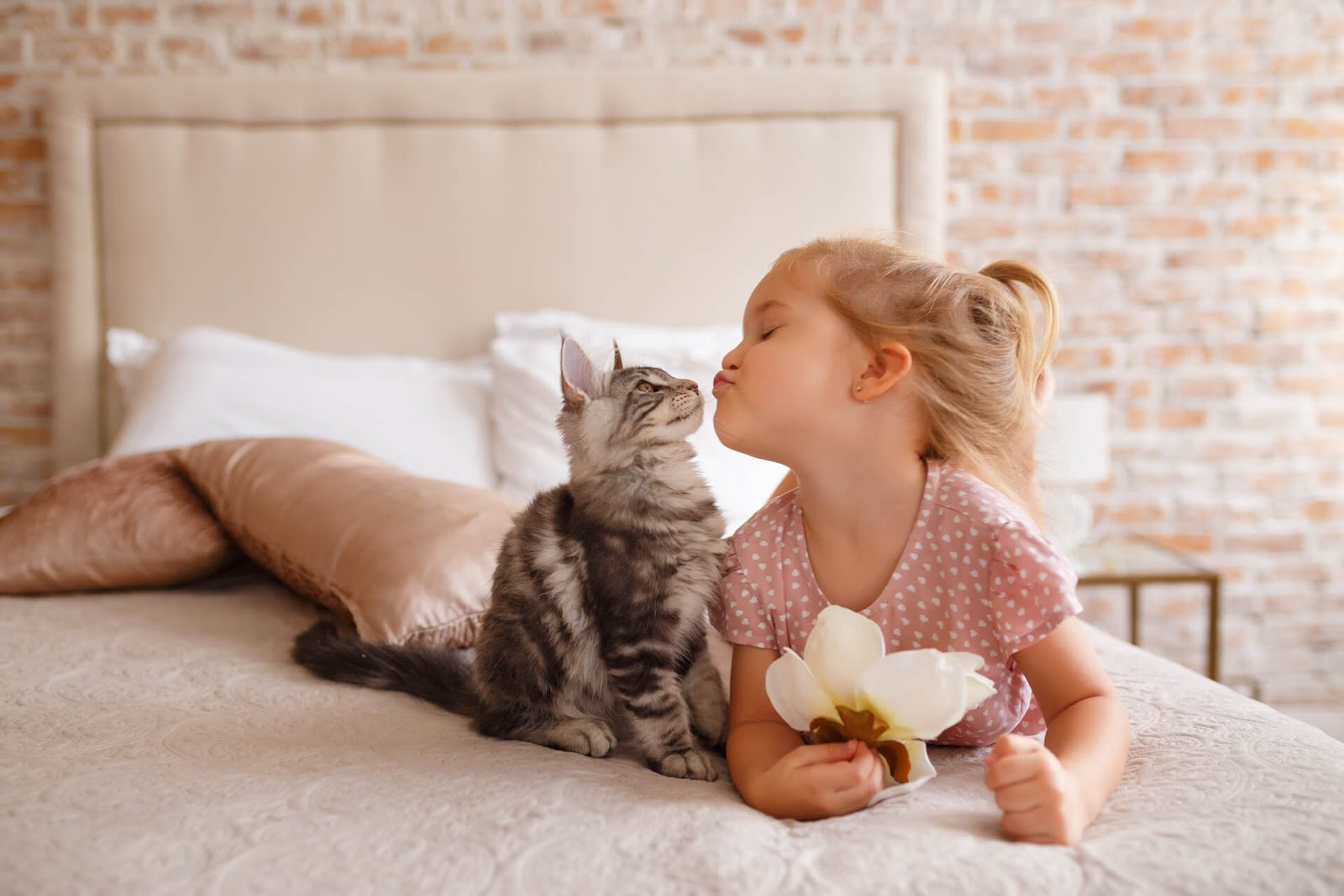 Young girl giving kisses to her kitten on her parent's bed