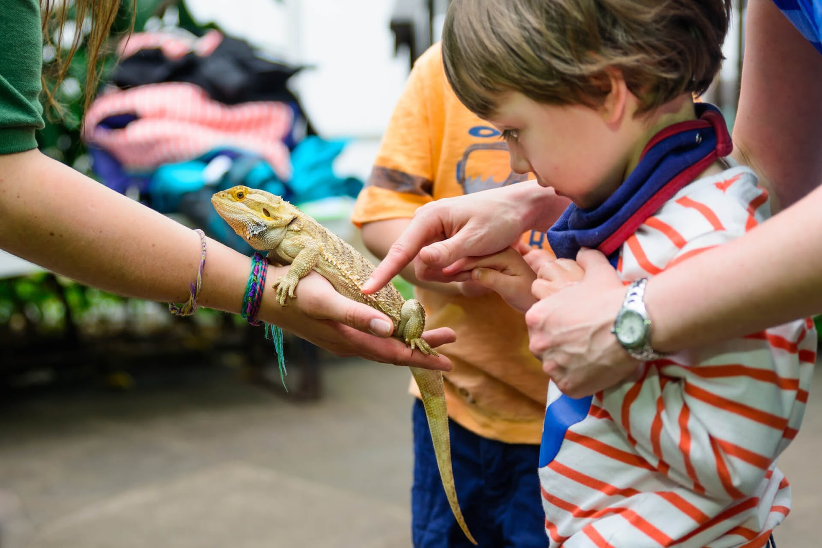 Young boy touching a bearded dragon at a zoo party