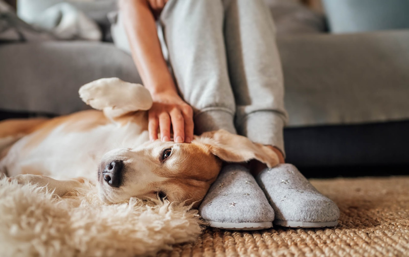 Dog laying on owner's slippers asking for belly rubs