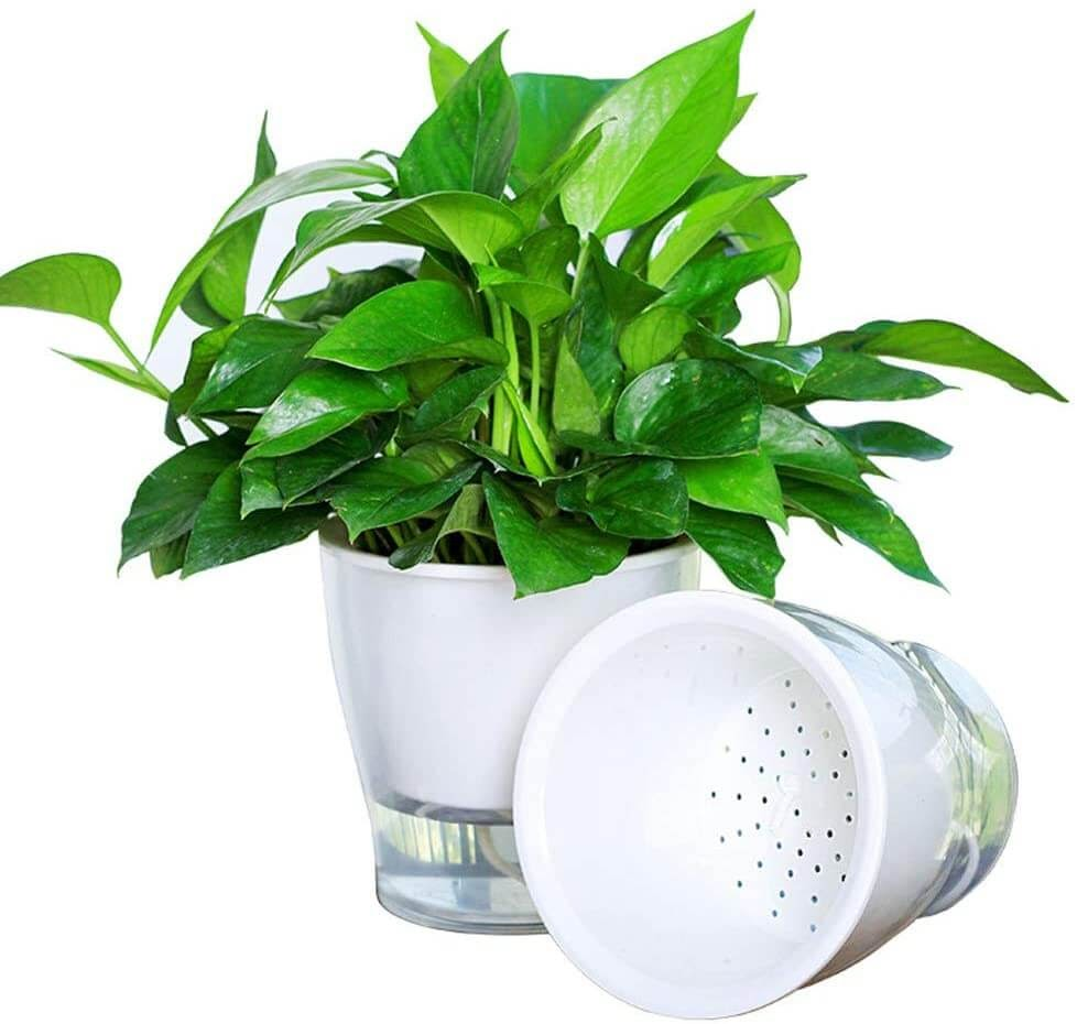 White, plastic pots with a plant in it