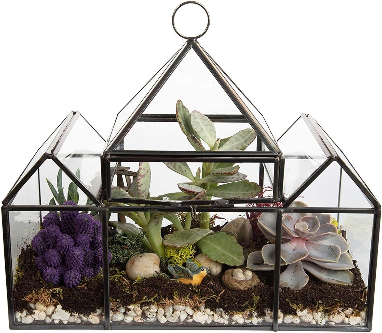 Terrarium with succulents in it