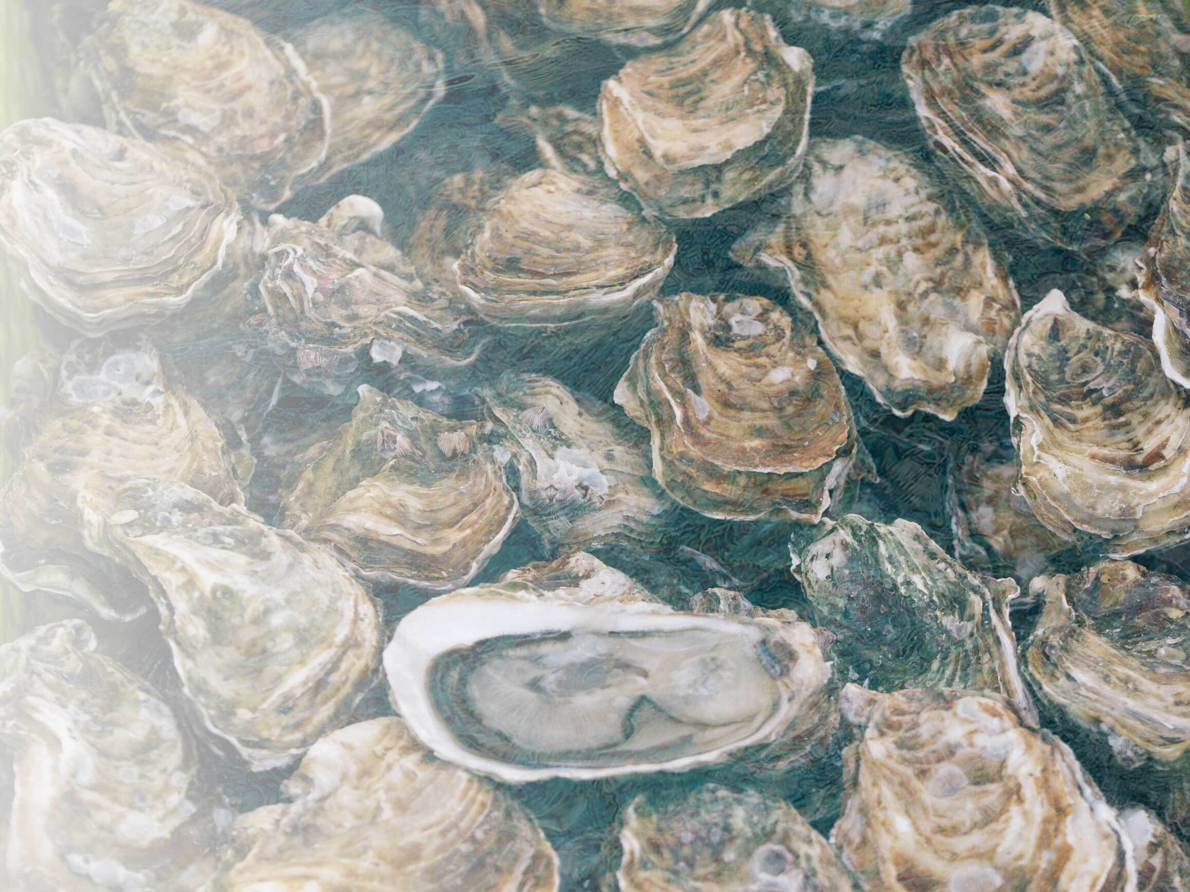 How to make an acid-proof oyster