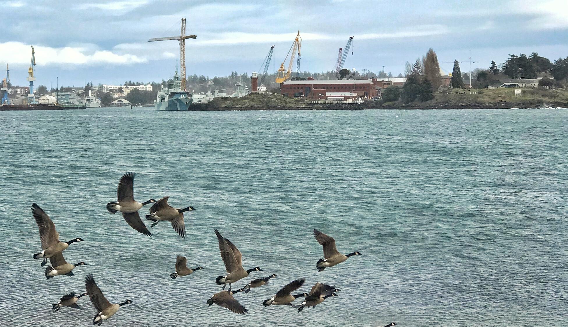 The local economic impact of Canada's Pacific Fleet