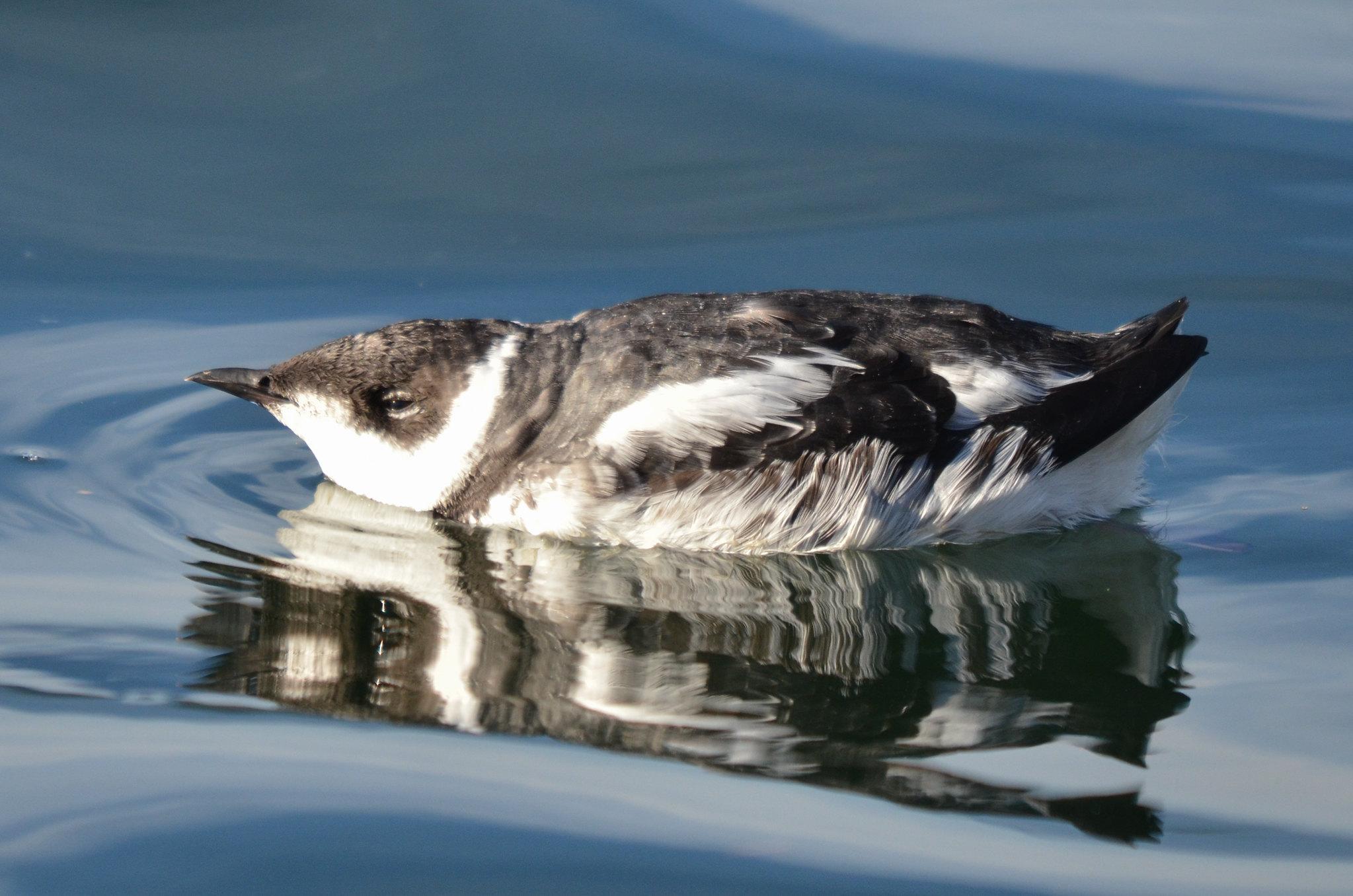 Meet the endangered bird that nests high above Fairy Creek