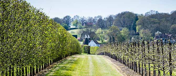 Hush Heath Winery by British Pullman