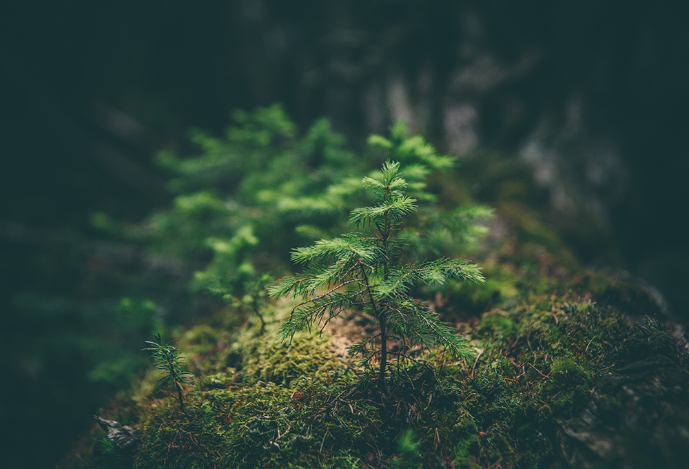 Small tree growing on log in the middle of a forest
