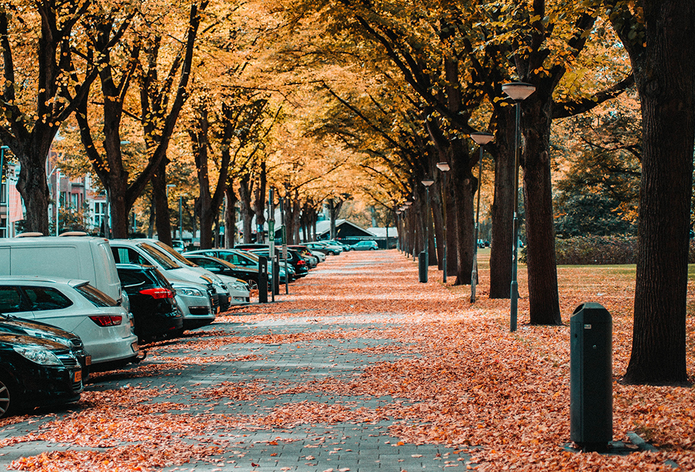 sidewalk covered with leaves lined with trees and parking