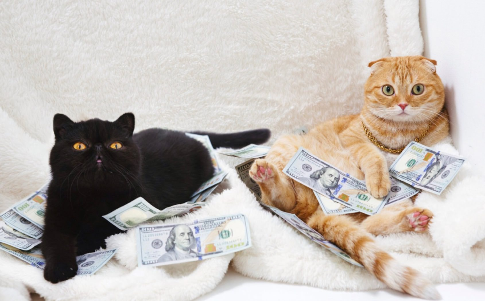 Cats lounging in hundred dollar bills