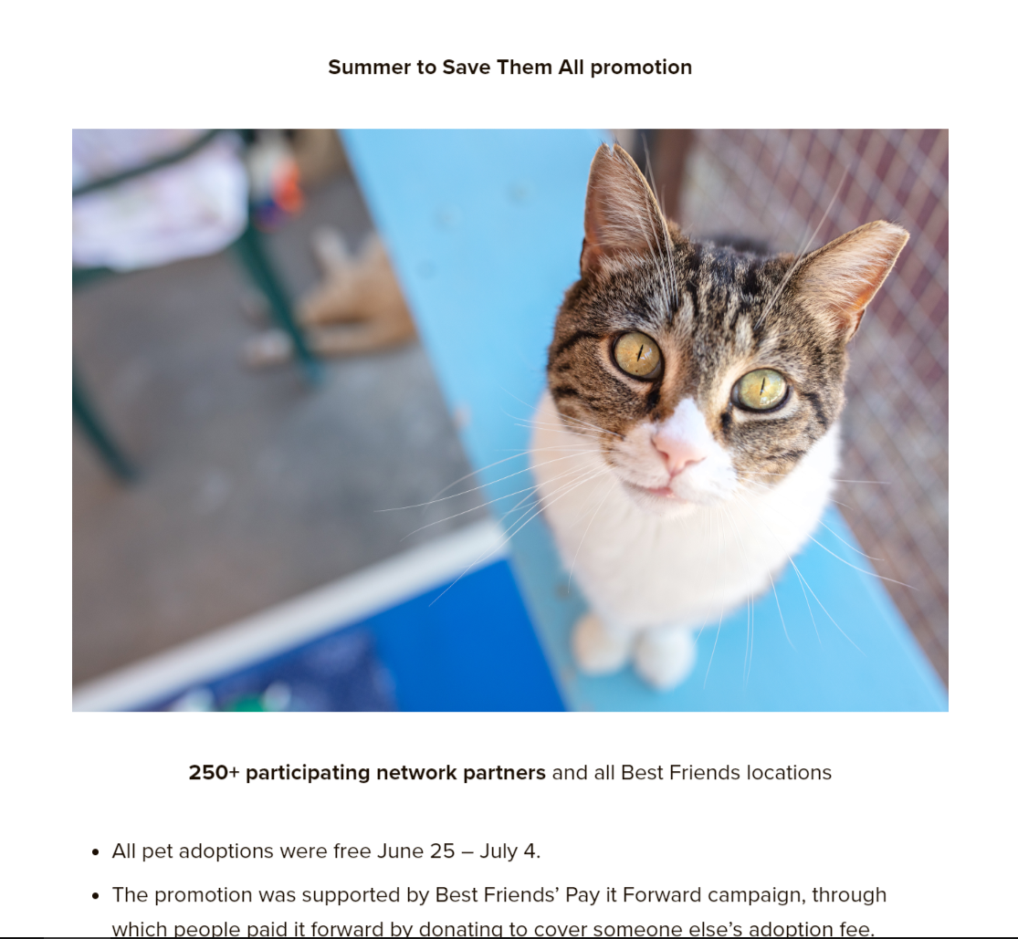 A page from Best Friends' annual report featuring a cat staring into the camera.