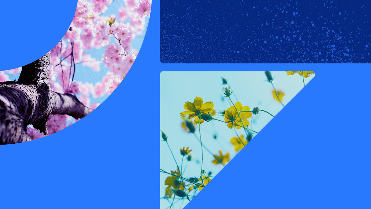 Photos of pink flowering trees and yellow wildflowers. The photos are set in on a blue background with blue shapes.