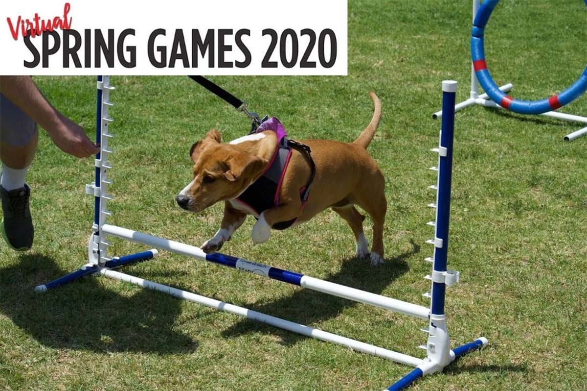 Basset Hound Rescue of Southern California Virtual Spring Games 2020