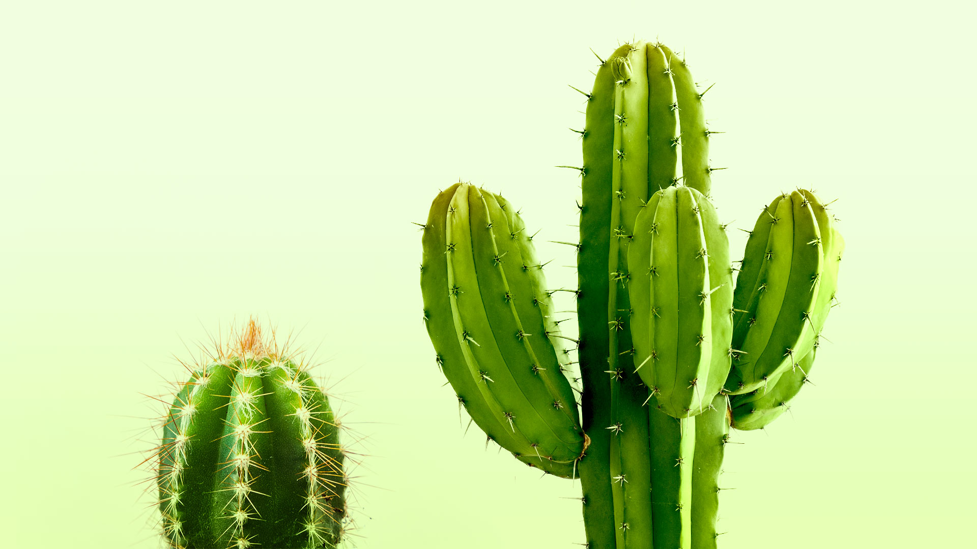 Two cactuses sit side by side. One is small and simple, and the other is tall with many branches.