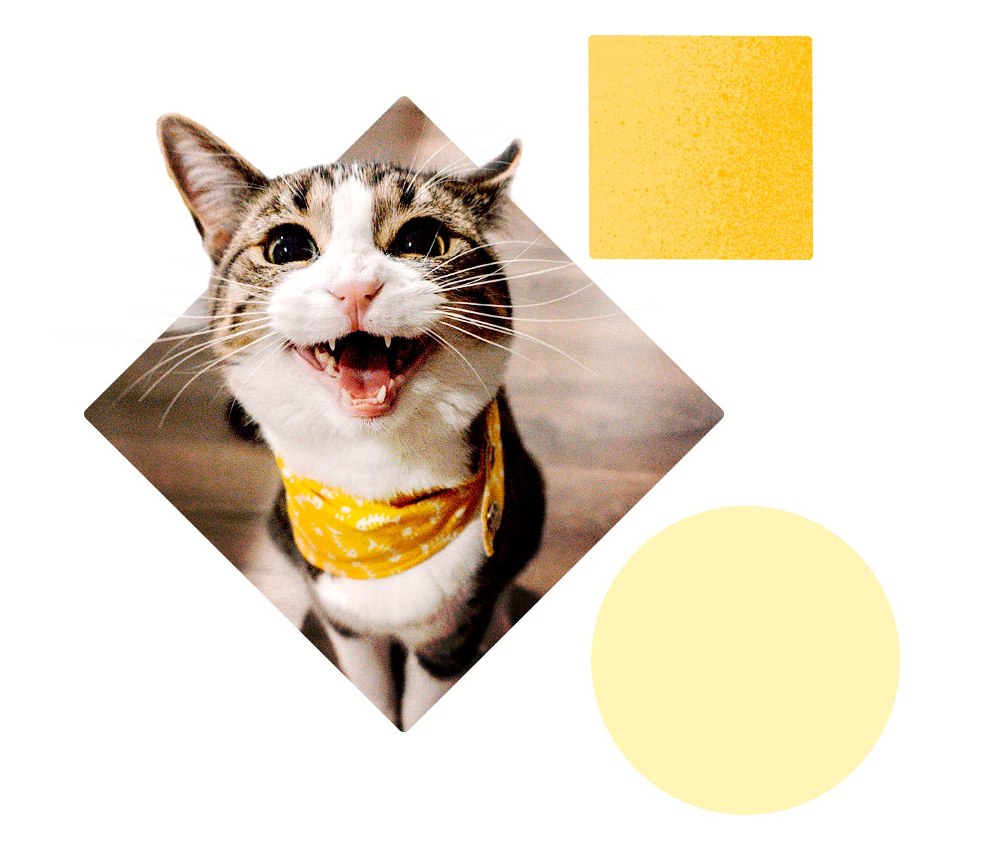 A cat grins at us wearing a yellow bandana.