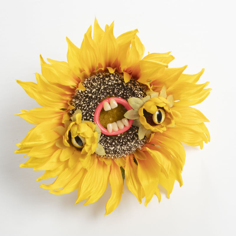 Sunflower with eyes and teeth