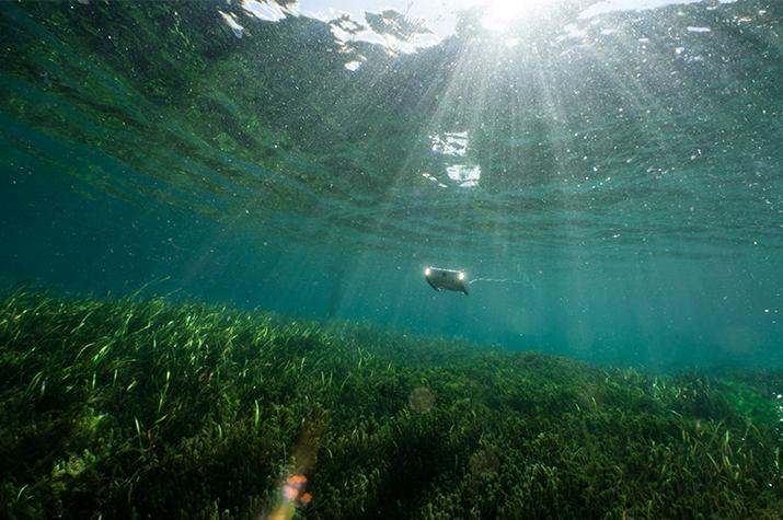Top Ten Shore Dive Locations in the U.S. for Underwater Drones