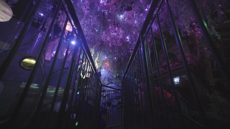 Meow Wolf Forrest
