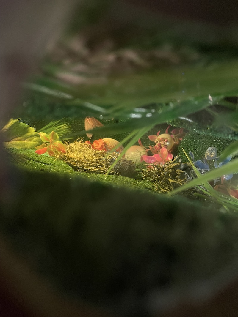 Looking inside a grassy area with a small nest in the middle
