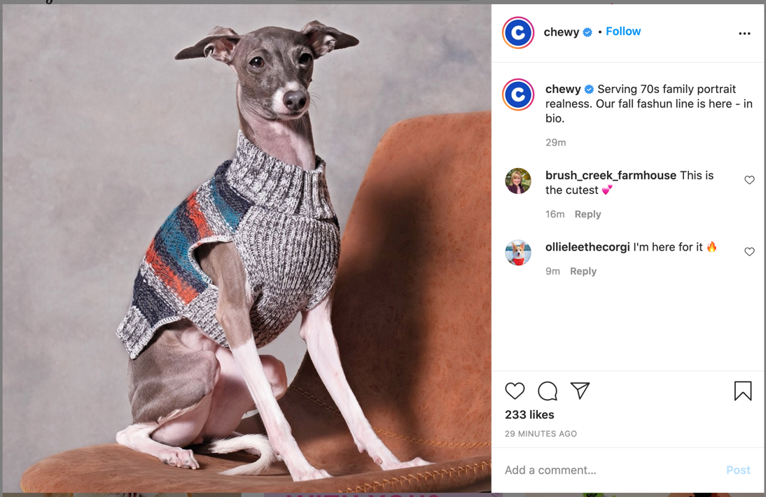 Chewy Instagram post showing grey and white Whippet dog sitting on rust-colored chair, wearing a striped grey dog sweater