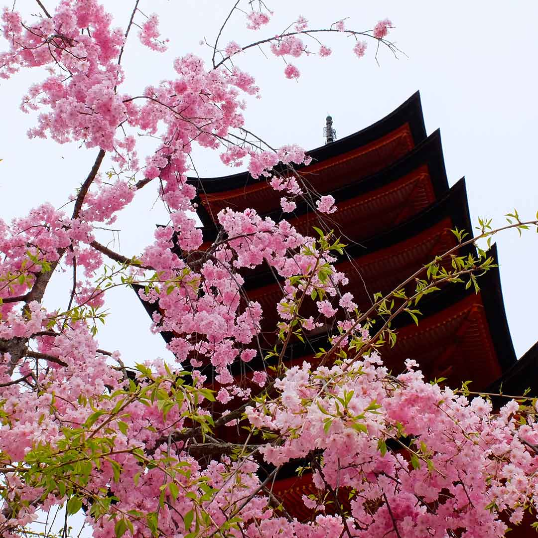 Why a school trip to Japan should happen now!
