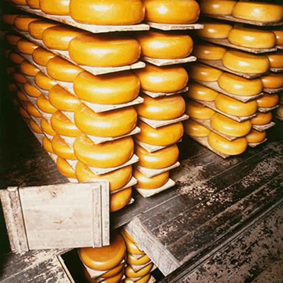 Reypenaer Cheese Tour