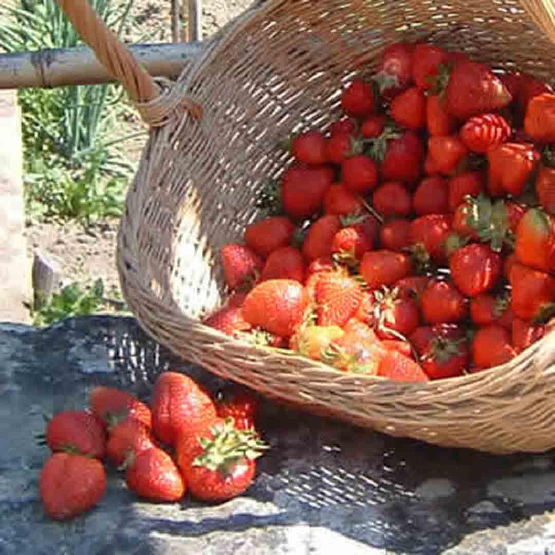 Agritourism Galatea