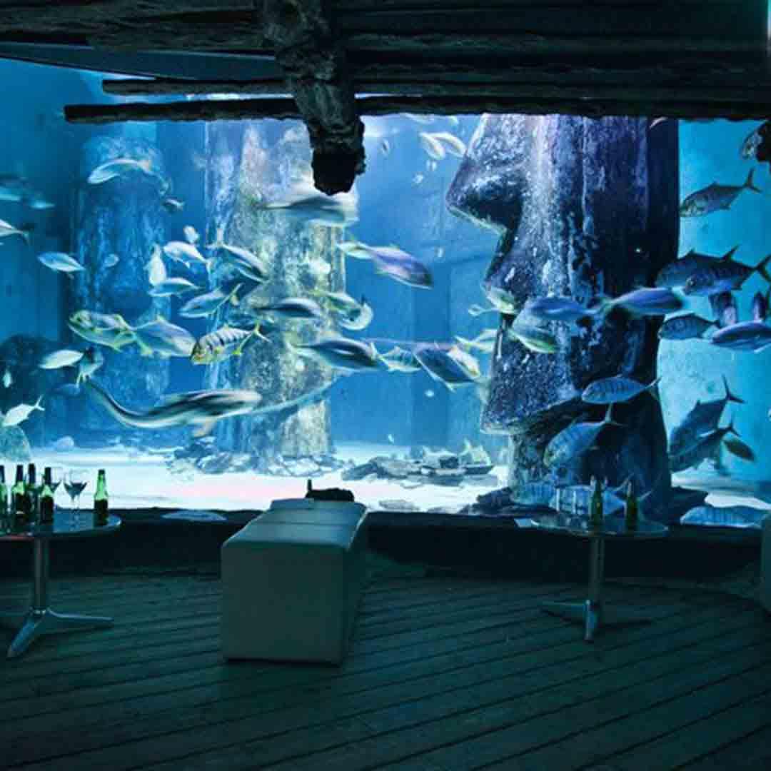 London Aquarium Presentations