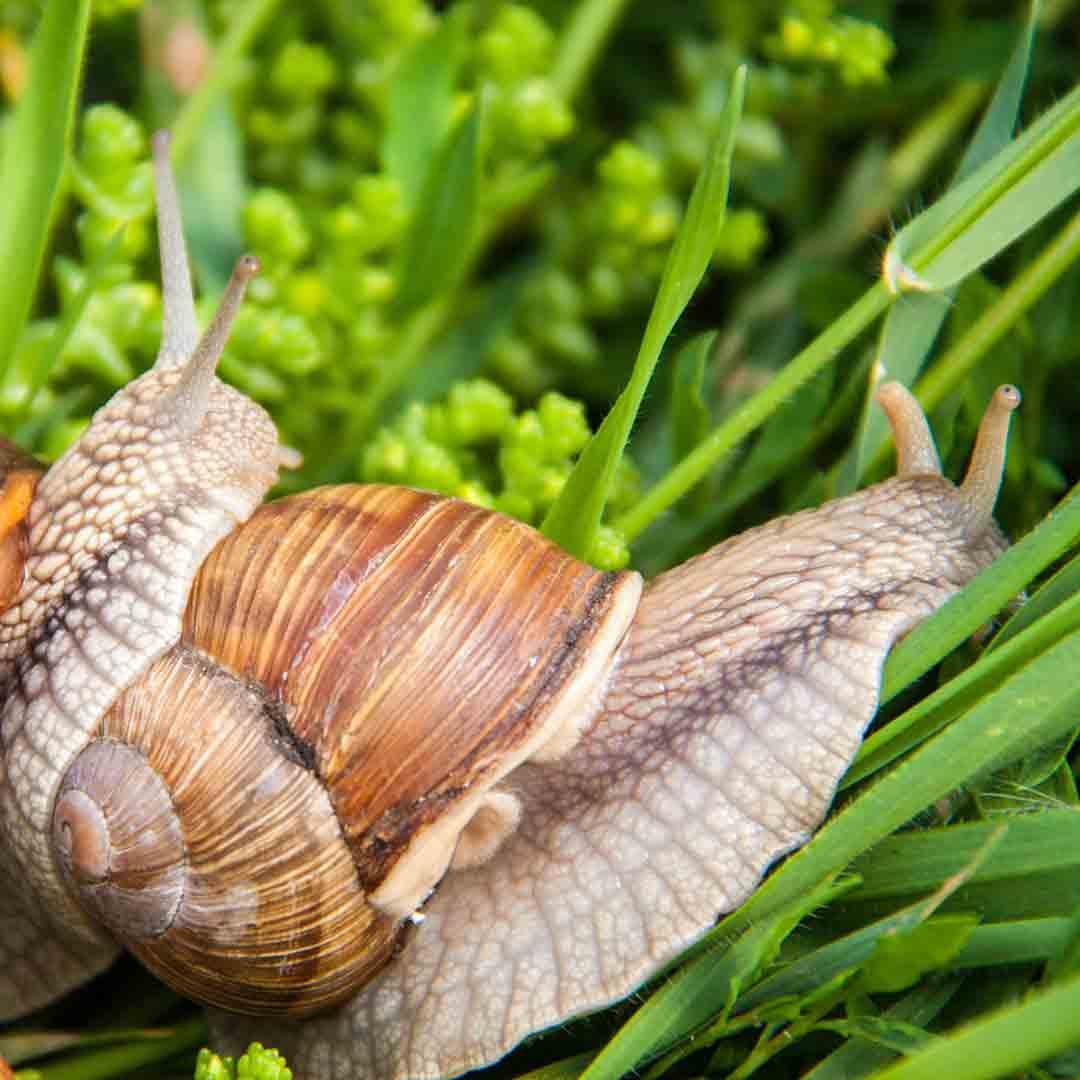 Les Escargots du Bocage