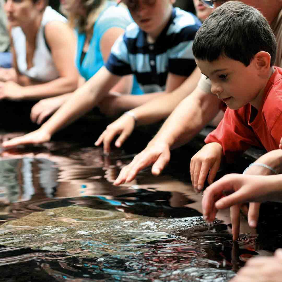 Nausicaa Sea Life Centre