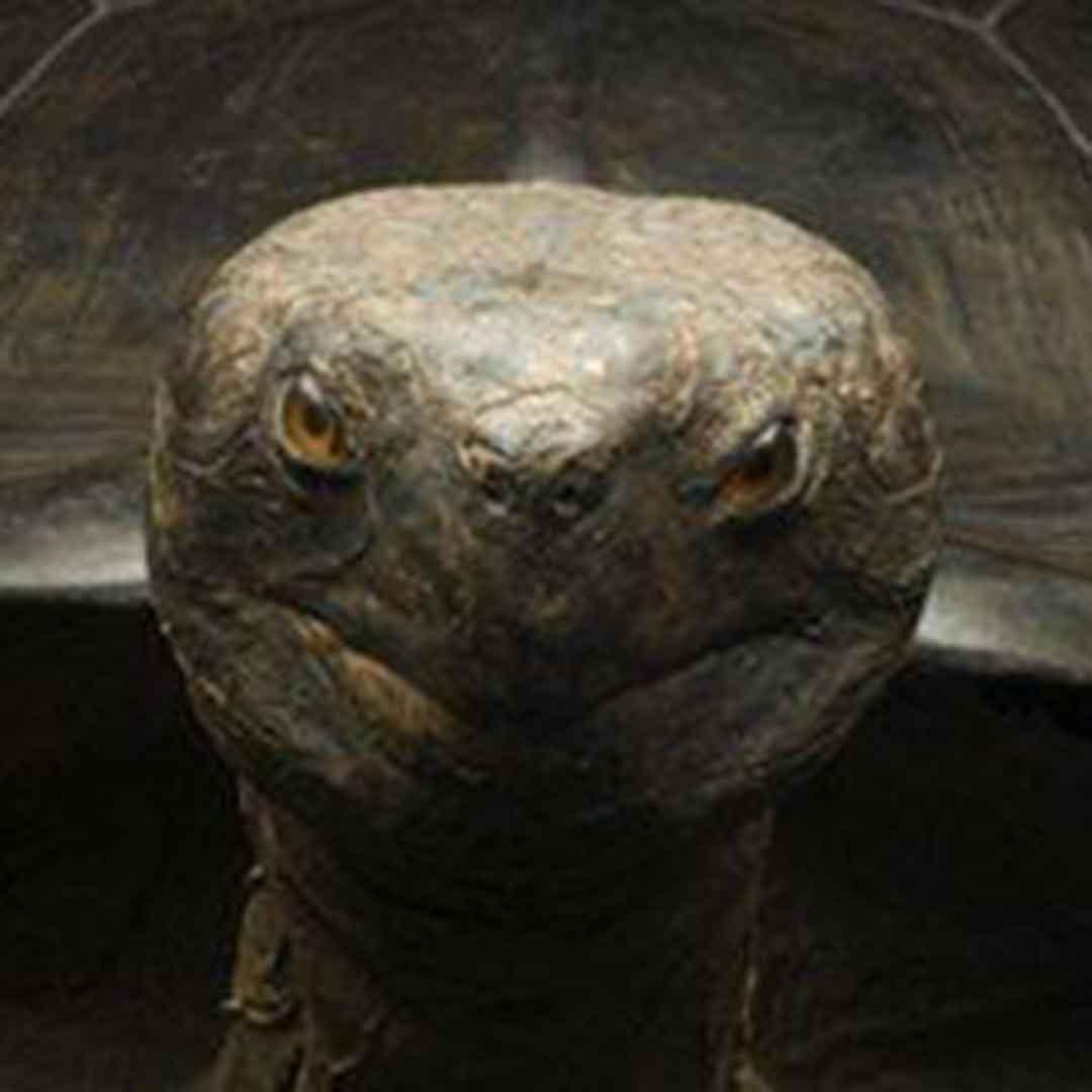 La Specola - Museum of Natural History
