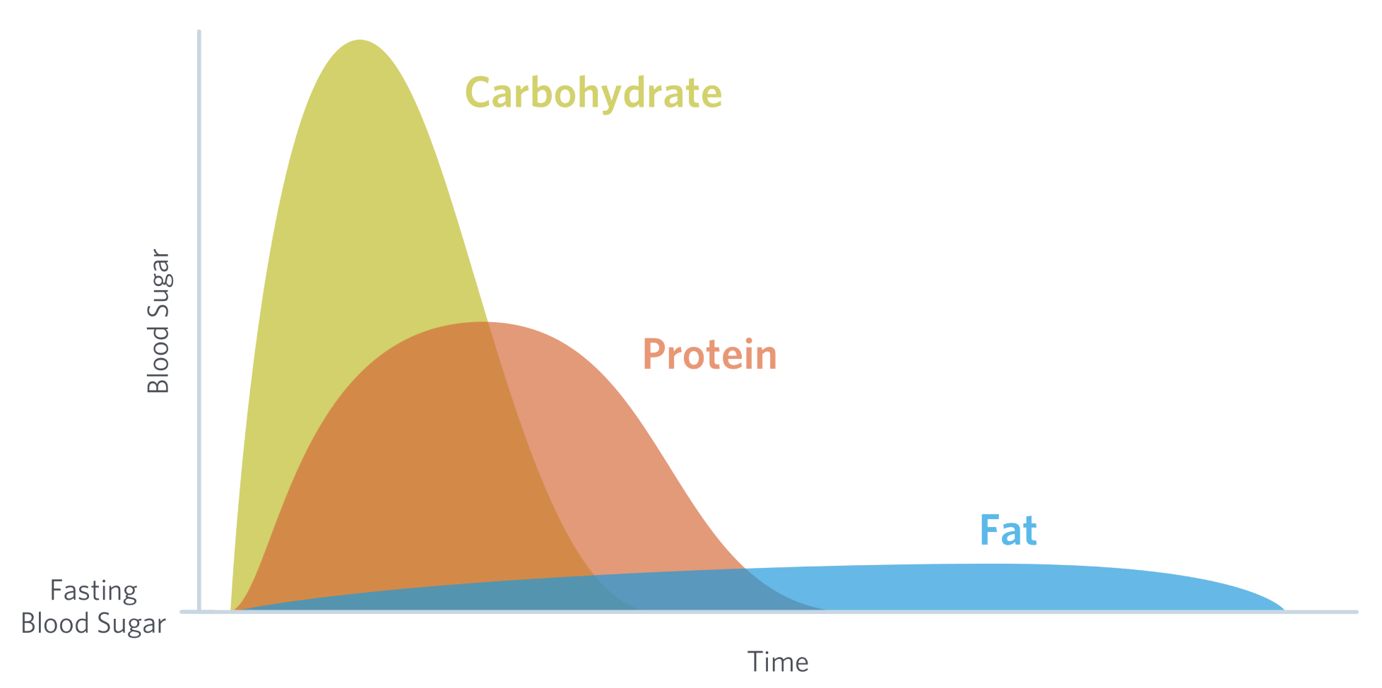 A diagram showing the blood sugar response to carbohydrates, protein, and fat