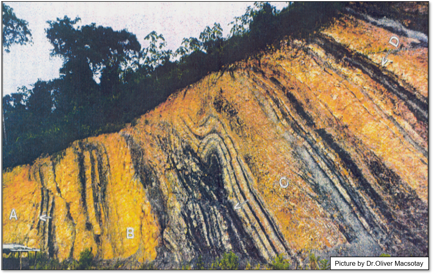 Early Cretaceous Conomita outcrop: structural analysis of syn-sedimentary gravity-driven deformations (NE Venezuela)