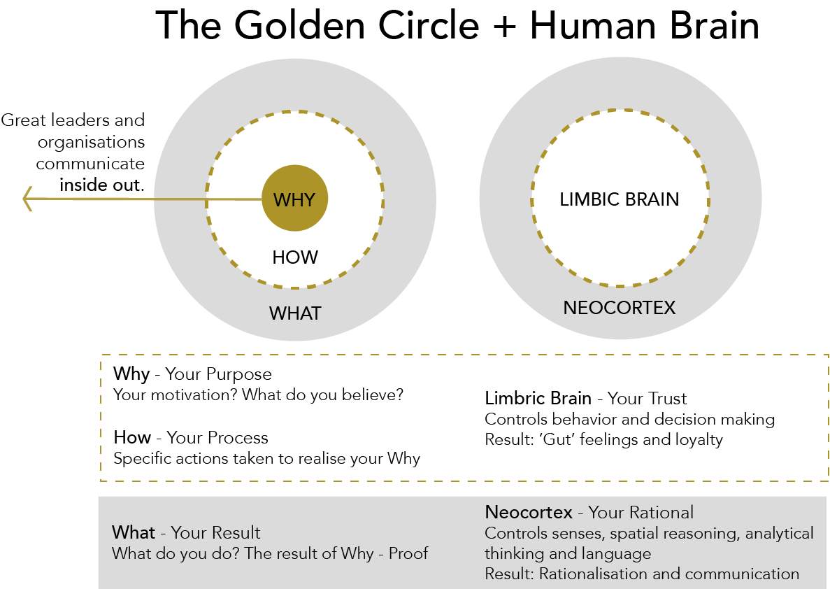 The golden circle and human brain