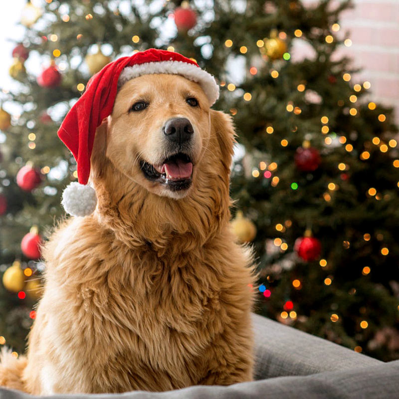 It's Christmas at Keilor Central - Pet Photography