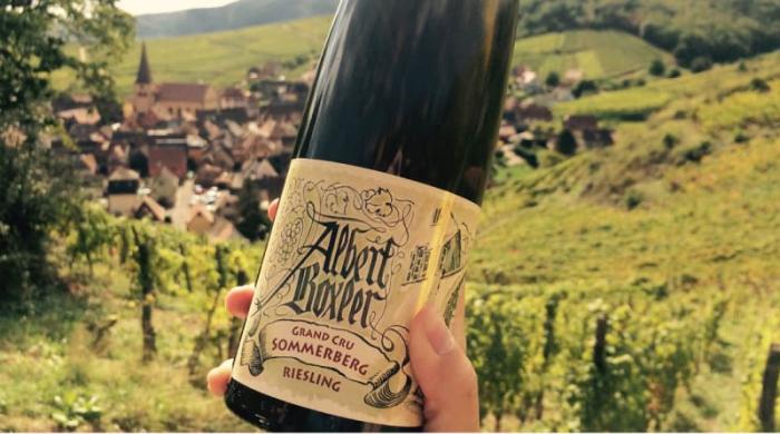 Red wine vs white wine: Pinot Gris
