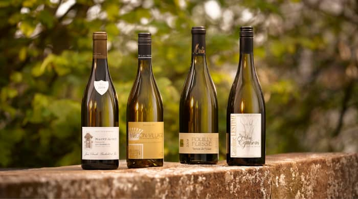 All About White Burgundy Wine