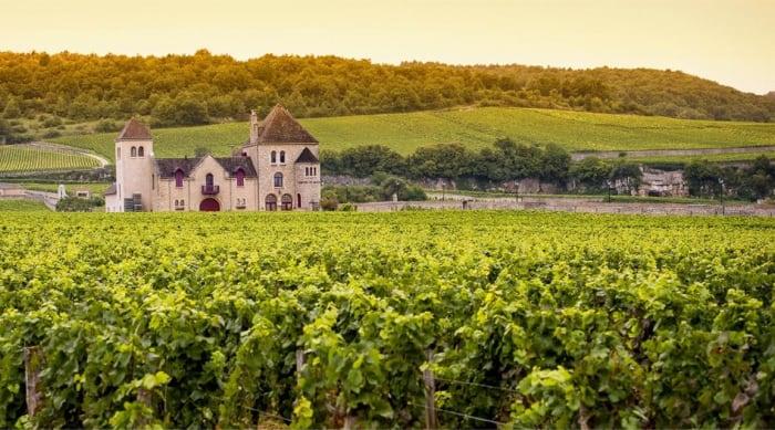 A Brief History Of Chardonnay