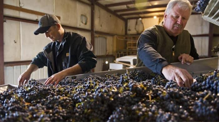 Valpolicella Grape Varieties