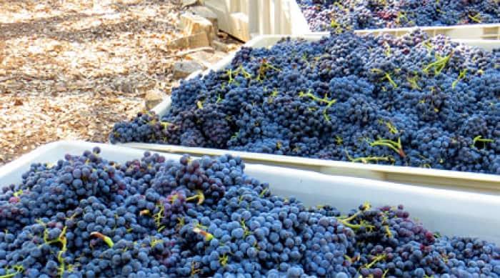 Cotes du Rhône Wine Making Processes