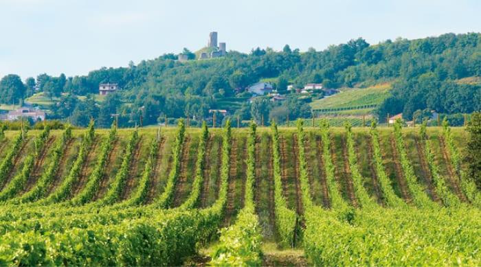 Cotes du Rhone wine: Saint Joseph