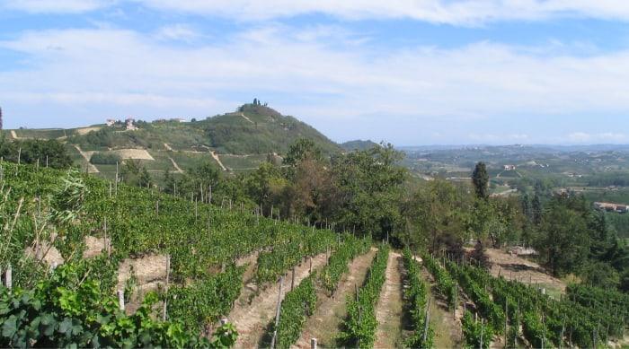 Terroir of Piedmont