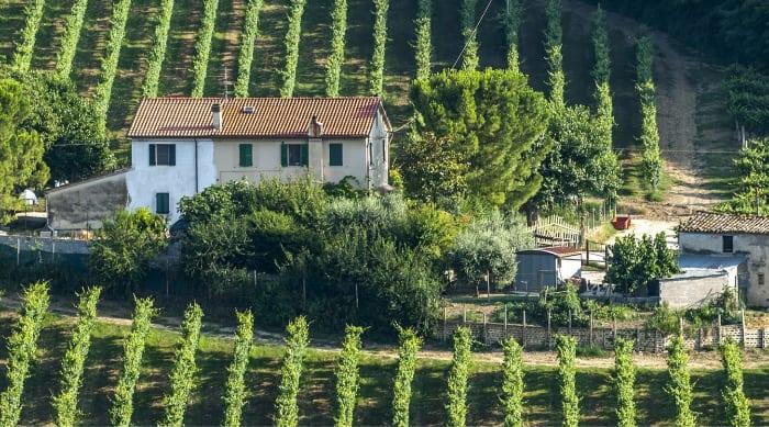 Montepulciano d'Abruzzo wine: Marche