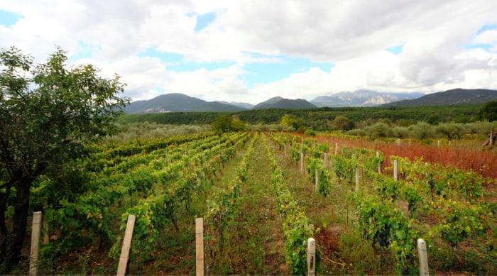 Montepulciano d'Abruzzo wine: Molise