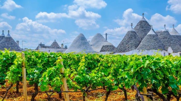 Montepulciano d'Abruzzo wine: Puglia