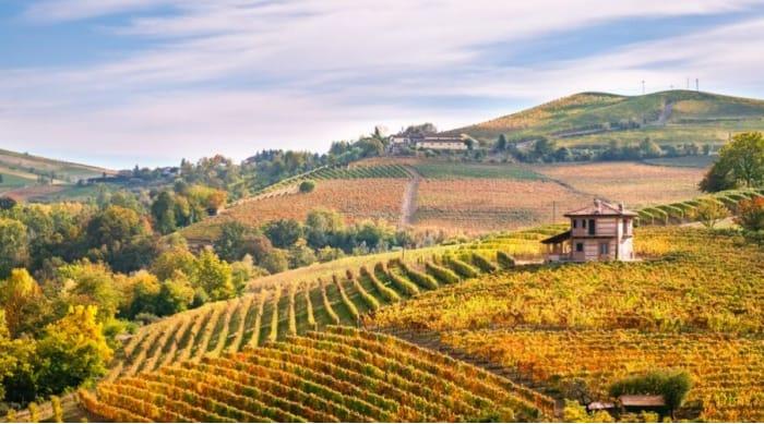 Barbera wine: Piedmont