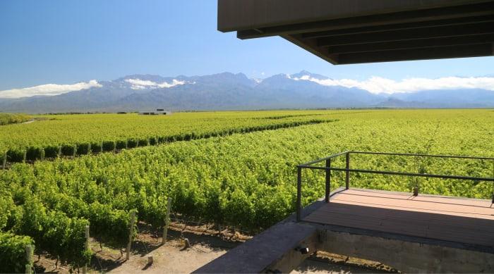 Barbera wine: Mendoza