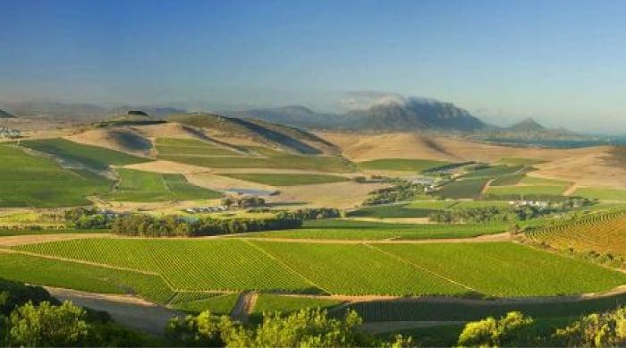 Barbera wine: Durbanville Wine Valley
